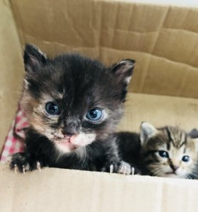 Котятки в добрые руки🙏🏻