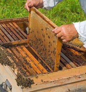 Мёд и рамки