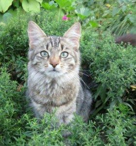 Котенок-подросток 6 мес. в добрые руки
