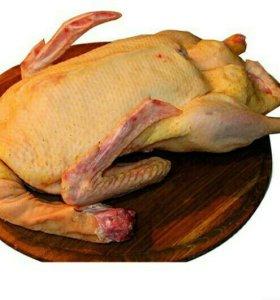 Мясо гуся и утки