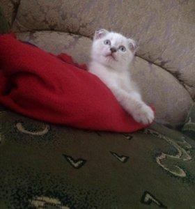 Котёнку 2 месяца
