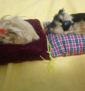 Кот и собака спят на подушке