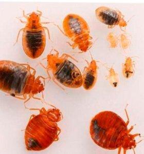 Уничтожение клопов, тараканов
