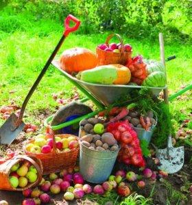 Вывозка урожая