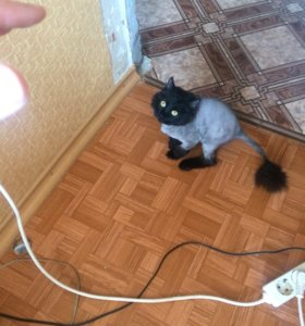 Игривый кот Леонид