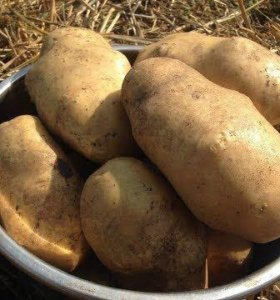 Картошка на продажу. Со своего огорода, крупная .