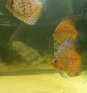 Продам аквариум на 200литров