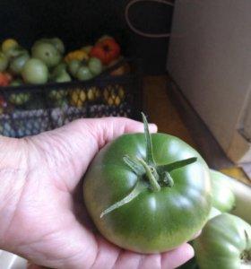 Продаю помидоры,черноплодка.