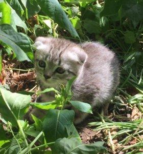 котята дворовые