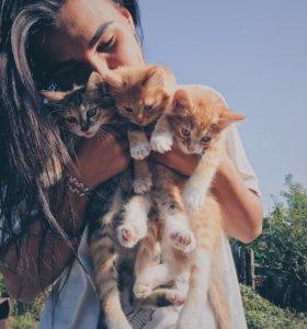 Отдадим котят