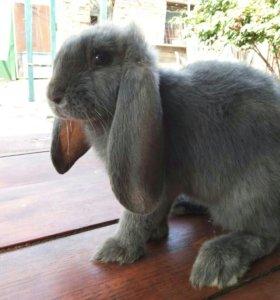 Кролики чистопородные