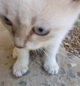 Котята. Две кошечки и два котика