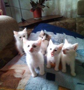 Очаровательные котята бесплатно