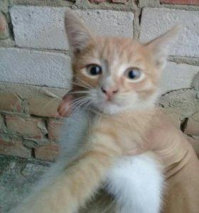 Кот мальчик