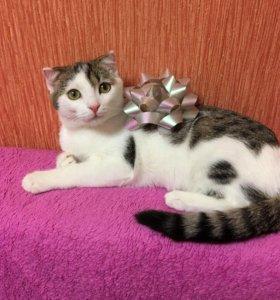 Кошечка в заботливые руки