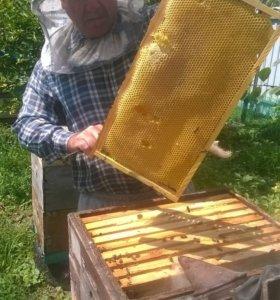 Цветочный мёд 2018