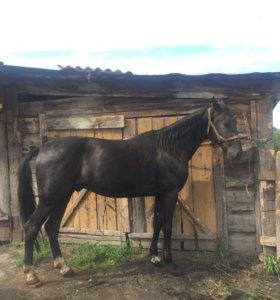 Конь Полигон