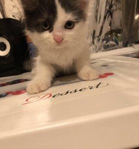 Котёнок)