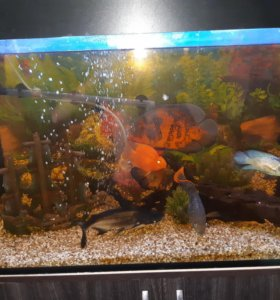Рыбок продам крупных