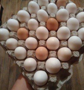 Продам вкусные домашние яйца