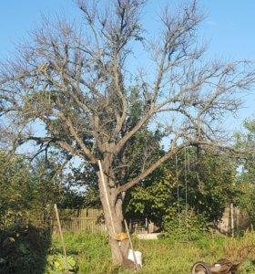 дерево на дрова