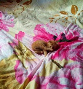 Рыжий котик ищет любящую семью!