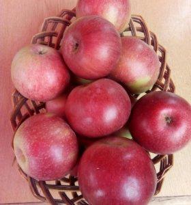 Яблоки из своего сада.