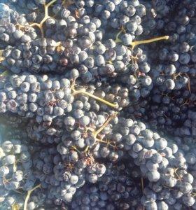 Виноград на вино