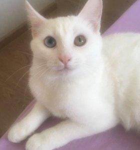 Белая ласковая кошечка!