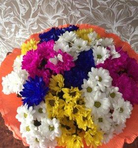 Приму в дар комнатные цветы
