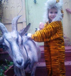 Продам козу и козленка