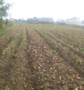 Участок, 30 сот., сельхоз (снт или днп)