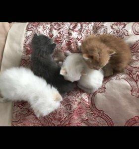 Котята, 1 месяц
