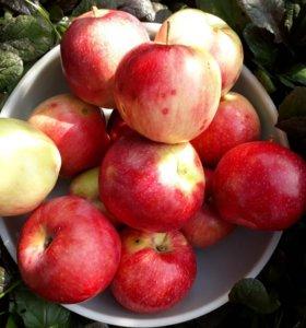 Яблоки вкусные