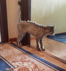 Модельные стрижки собак и кошек-груминг