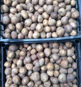 Картофель мелкий 300