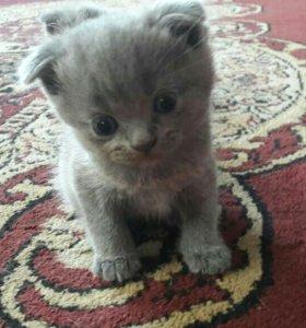 Продам котенка.