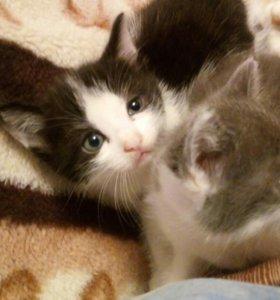 Отдам маленьких котят в добрые руки