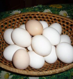 Яйца домашние .
