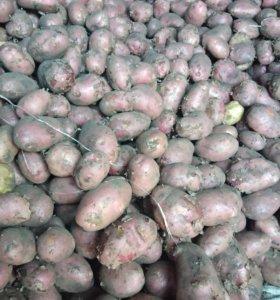 Картошка 150 р - 10л