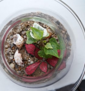 Флорариум, мини-сад, композиция из растений