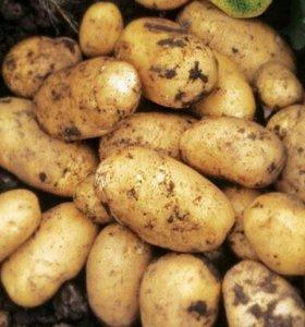 Картофель с доставкой