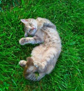Котята домашней кошки