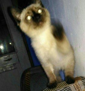 Котенок Гав