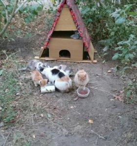 Бездомные котята в Воскресенске