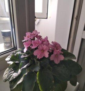 Цветы комнатные.