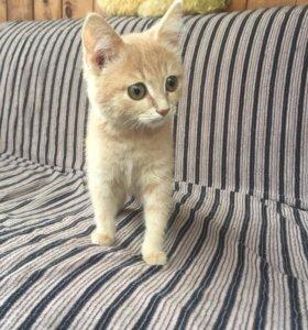 Котик 3 мес Персик