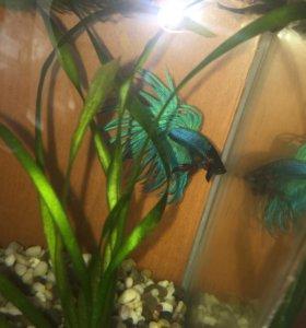 Аквариум с рыбками и растениями