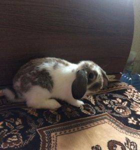 Продам декоративного кролика + клетка новая