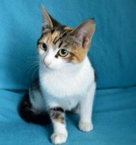Нежная Дашенька в поисках семьи, котёнок 3,5 мес